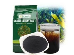 How seaweed extract works for plants