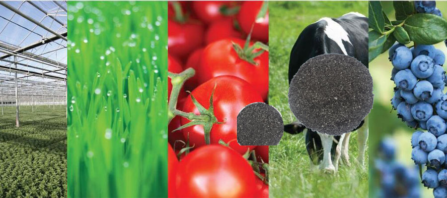 Why humic acid is necessary for plants