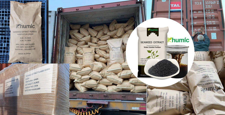 The seaweed extract powder and flakes shipped to Spain