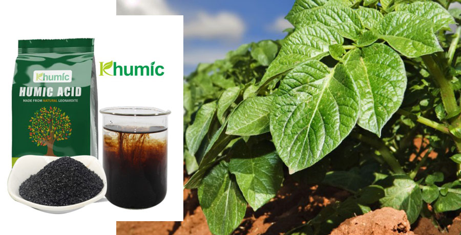 how humic acid works in plants