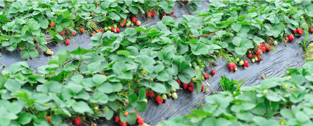 When to use humic acid