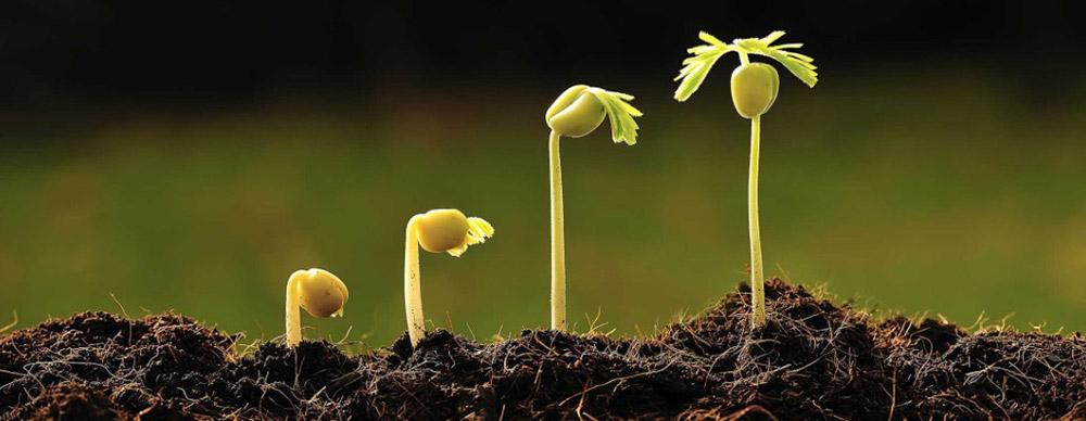Humic acid fertilizer is the nemesis of soil disease