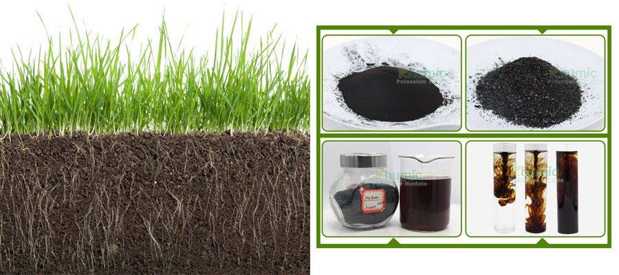 HUMIC ACIDTHE SCIENCE OF HUMUS AND HOW IT BENEFITS SOIL