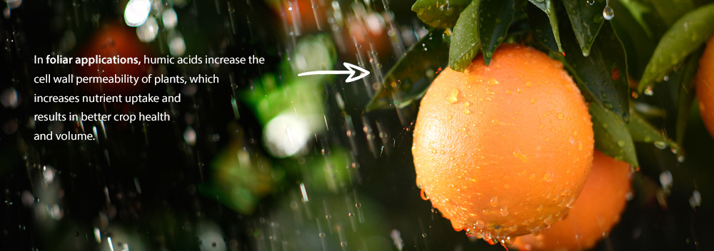 The water souble humic fulvic acid fertilizer for citrus