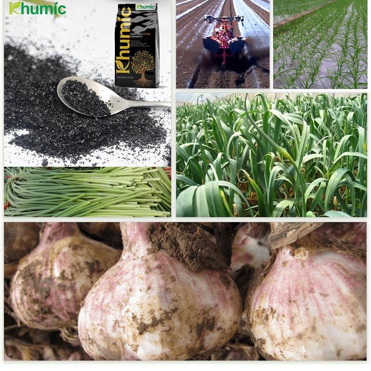 humic acid for garlic