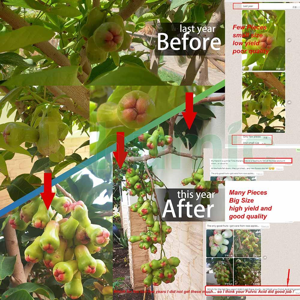 Khumic FulvicMax Fulvic Acid on Rose Apples